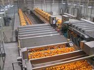 پاورپوینت کارخانه تولید کنستانتره آبمیوه ای
