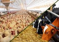 پاورپوینت کاربرد آنتی بیوتیک در تغذیه دام و طیور (موننسین)