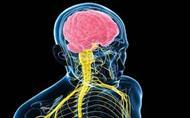 پاورپوینت دستگاه عصبی