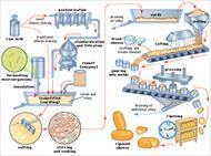 پاورپوینت تکنولوژی ساخت پنیرهای صنعتی