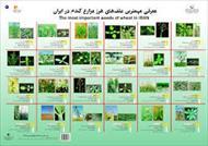 پاو وینت شناسائی گونه های علف های هرز آموزشکده کشاورزی