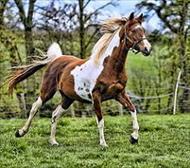 تحقیق آیا بین سن اسب و علوفه مصرفی ان رابطه ای وجود دارد؟