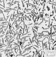 پاو وینت تشکیل ساختار میکروسکوپی فولادها بر اثر سرد آرام